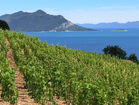 Peljesac Peninsula is full of vineyards